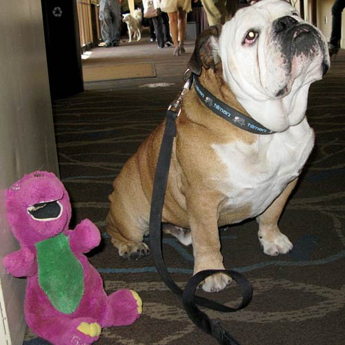 Barney meets Tillman at BlogPaws