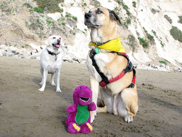Barney Meets Maximutt in Newport Beach, CA