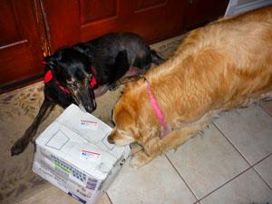 Rio and Zephyr Release Barney