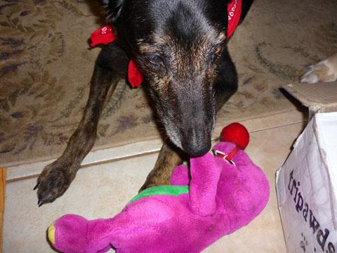 Rio Greets Barney