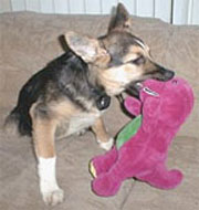 Puppy Jerry with First Barney