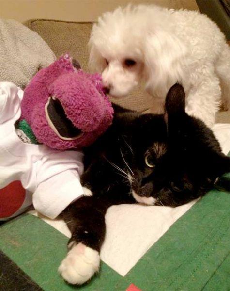 Barney and Jill